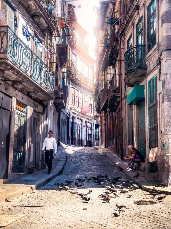 Porto Portugal pigeons